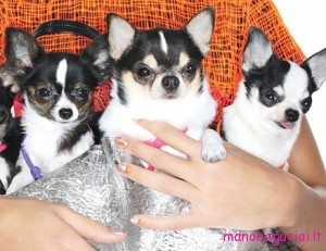 0519-02-puppies-nails-metallic_li